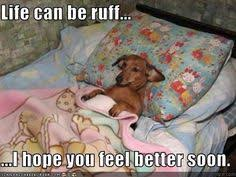 Image result for get well wishes dog