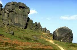 Image result for cow and calf ilkley bradford images copyright free