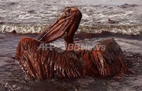 「2010年 - メキシコ湾原油流出事故」の画像検索結果