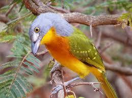 un oiseau à trouver Martin 20 mars trouvé par Martine - Page 2 Images?q=tbn:ANd9GcR3atTncKdU9TVyc6jIEJGyLRmspI6b2y7uqQjX6NwehLerr-jQIQ