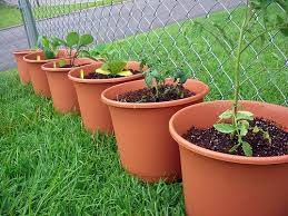 Image result for kids container garden