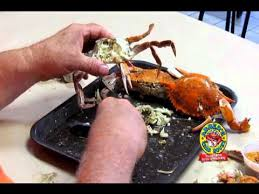 Image result for blue crabmeat