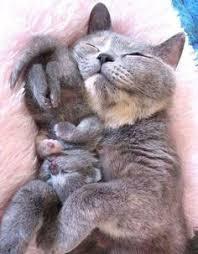 Лучших изображений доски «Cats»: 174   I love cats, Beautiful cats ...