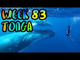 SNORKEL with HUMPBACK WHALES in TONGA!!  WEEK 83 ...