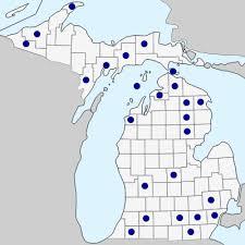 Panicum miliaceum - Michigan Flora