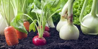 Image result for plant veggies
