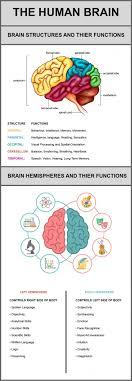 17 best ideas about the human brain the humanity neuroplasticity
