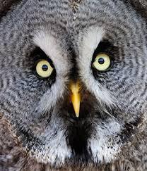 Résultats de recherche d'images pour «le parc des oiseaux»