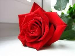 Resultado de imagen para foto rosa roja