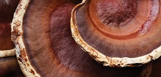 <b>Dr</b>. <b>Weil</b> Mega-Mushroom with Reishi Mushroom | <b>Origins</b>