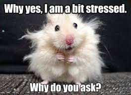 Memes About Stress At Work - to relieve stress work harder make a ... via Relatably.com