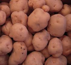 scheda 11 patata def