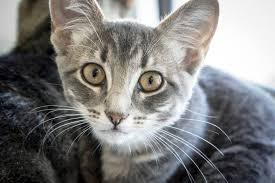 Aww! <b>Kittens</b> are Ready For Adoption | <b>Berkeley</b>, CA Patch