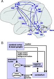articles journal of neurophysiology figure