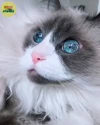 Those eyes [Video] | Cute cats and kittens, Cute animal videos, Cute ...