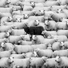 Черно-белая фотография: лучшие изображения (26) | Черно ...
