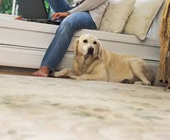 carpet cleaning in oinconning