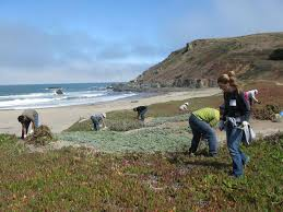 Image result for Pacifica beach picture