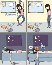 Funny Pictures That Explain Accurately The Faulty Logic Of Cats ... via Relatably.com