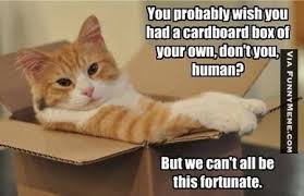 cat-memes-we-cant-all-be-this-fortunate.jpg (450×291) | All Funny ... via Relatably.com