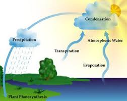 atmosphere  climate  amp  environment information programmethe water cycle