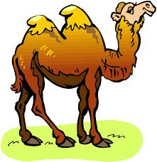 Resultado de imagen de camello