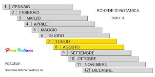Oreochloa disticha [Sesleria a spighette distiche] - Flora Italiana