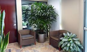 types of amazing office plants amazing office plants