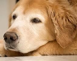Κρυολογούν οι σκύλοι;