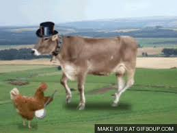 Image result for cow tipping gif