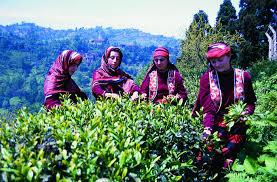 çay toplayan köylü kızlar ile ilgili görsel sonucu