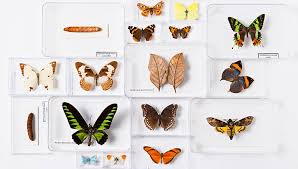 <b>Beautiful Butterfly</b> Competition | Natural History Museum