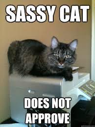 sassy cat does not approve - Misc - quickmeme via Relatably.com