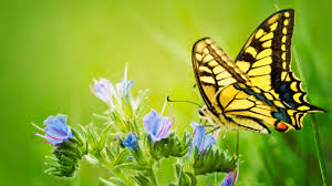 Resultado de imagen de Mariposa