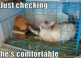 FunnyMemes.com • Funny memes - [Just checking he's comfortable] via Relatably.com