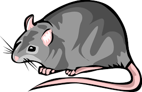 Image result for rat clipart black and white
