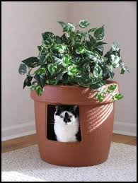 10 ideas for disguising or hiding a litter box apartment therapys home remedies apartment therapy bookcase climber litter box