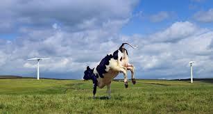 نتيجة بحث الصور عن moving cow
