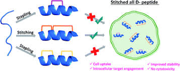 Macrocyclization of an all-d linear α-<b>helical</b> peptide imparts cellular ...