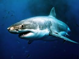 most dangerous animal in north america planet deadly sharks