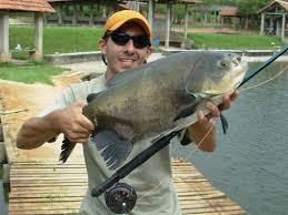 Resultado de imagem para imagens de receitas de peixes PIRAPUTANGA