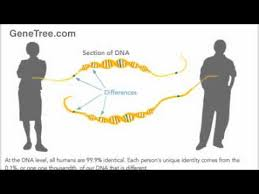 DNA results new complexities, DNA differences, Putman, family, family history