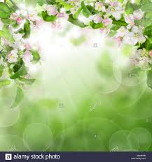 <b>Abstract Green</b> Background with <b>White Flowers</b>, <b>Green</b> Leaves and ...