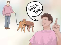 how to become a professional dog walker pictures wikihow walk two dogs one leash