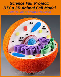 Homework Helper  How to build a   D Animal Cell Model   Crafts      n