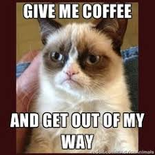 Grumpy cat on Pinterest | Grumpy Cat Meme, Funny Pets and Dog Pictures via Relatably.com