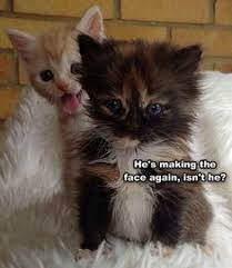 70 Best <b>Naughty Cats images</b> | Cats, Crazy cats, Funny cats