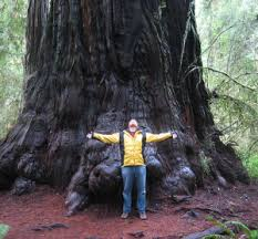 Image result for trees pictures include redwood, fir, oak