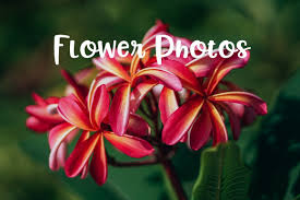 32 Free Stock <b>Pictures</b> of <b>Flowers</b> | Fancycrave