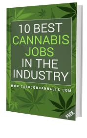 how do you get a job in the cannabis industry cash cow cannabis 10 best cannabis jobs that you can start today this ebook and subscribe